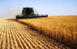 Сельское хозяйство – единственная в Украине область, которая демонстрирует рост, – Яценюк